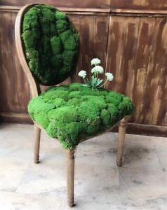 10g Artificial plant eternal life moss / Garden home decoration wall DIY Flower