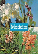 BR8904 Orquideas da Quinta da Boa Vista Funchal Madeira   portugal