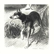Doberman Pinscher - Morgan Dennis Dog Print - Matted