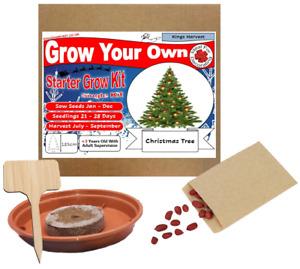 Grow Your Own Christmas Tree Plant Kit - Indoor Windowsill Gardening Seeds Gift