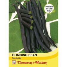 Thompson & Morgan-Verduras-escalada Haba semilla blauhilde - 70