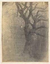 Diot. France, étude des arbres  vintage albumen print. Tirage albuminé  17x2