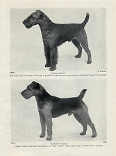 WELSH TERRIER TWO NAMED DOGS OLD ORIGINAL DOG PRINT FROM 1934