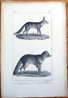 1830s French Animal Print: Wolverine, Wolf, Loup de Daxara