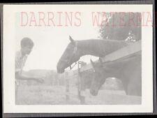 Vintage Photo Young Man Feeding Horses 734207
