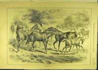 Original Old Antique Print 1884 Dangerous-Play Horses Foals Horse Animal 19th