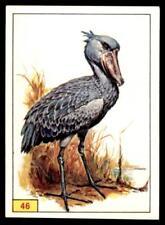 Panini Birds 1978 - Shoebill No. 46