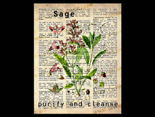 SAGE 10x8 DICTIONARY WORD ART PRINT vintage wicca herb poster kitchen witch bos