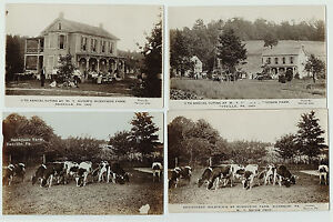 RPPC Lot Set of 4 --  Sunnyside Farm Riverside / Danville PA 1910 Real Photos