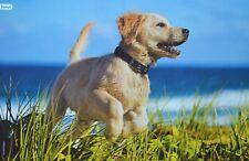 HUNDEWELPE - A3 Poster (ca. 42 x 28 cm) - Hund Baby Welpe Tier Plakat NEU