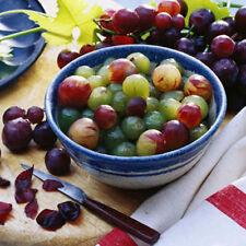 Mezcla De Semillas De Uva Verde Morado Rojo-Variedad dulce, jugoso frutas 10 semillas más finos
