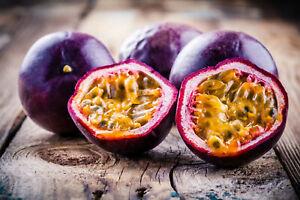 10+ Passion Fruit Seeds    Purple Edulis Passionfruit Vine EDIBLE - US FREE SHIP