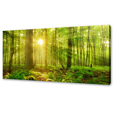 SUNBEAMS SHINING THROUGH THE GREEN FOREST BOX CANVAS PRINT WALL ART PICTURE