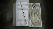 Human Skeleton Model Package Instructional Hobby Business Medical