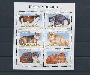 LO56305 Comoros pets animals cats good sheet MNH