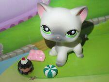 "LPS Pet shop Chat Europeen * Petshop Kitty Cat #125 "" NEUF "" + Accessoires"