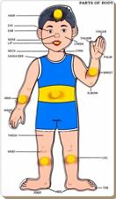 Little Genius Parts of Body - Boy with Knob (Free shipping worldwide)
