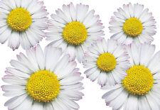 Blumen Aufkleber Gänseblümchen Auto Aufkleber: Flower Set 06-Mini-36 Stück