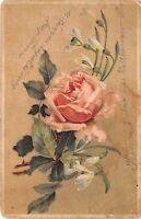 B41085 fleurs flowers roses