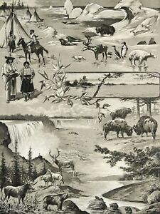 1900 Antique lithograph of CANADA. 120 years old print