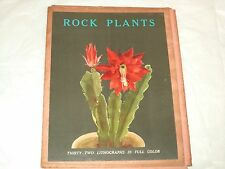 1948 Art Collection - 32 Lithographs In Full Color By Arlette Davids Rock Plants
