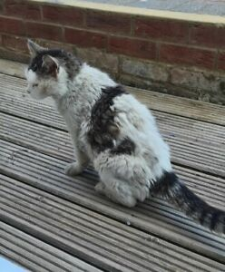 99p HELP TO FEED A HOMELESS CAT - HOMELESS CAT RESCUE