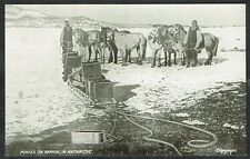 More details for 1907-09 british antarctic expedition postcard ponies on arrival in antarctic vf