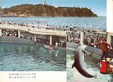 BR56433 Dauphine dolphine the marienland et enoshima Animaux animals