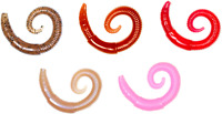 Lunkerhunt 2 inch River Worm Soft Plastic 8 pack Bass, Trout, & Panfish Bait