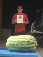 Giant Watermelon seeds - 253.5 lbs - Carolina Cross watermelon seeds