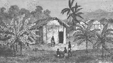 GABON. Fetish banana trees near the River Ogooue/Ogooue, Gabon 1891 old print