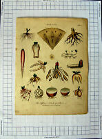 Old Antique Print C1790-C1900 Botany Different Kinds Roots Plants Nature 18th