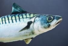 Gaby Atlantic Mackerel Fish Pillow