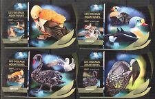 D{105} DJIBOUTI 2016 WATER BIRDS SWAN DUCKS SET OF 4 S/S DELUXE IMPERF. MNH**
