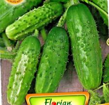 GHERKIN - IRA F1 - PICKLING GHERKIN - 50 HIGH QUALITY VEGETABLE SEEDS /128
