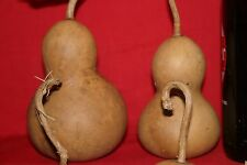 Gourds 3- Bottle Gourds (Washed And Dried )