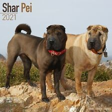 Shar Pei Calendar 2021 Premium Dog Breed Calendars