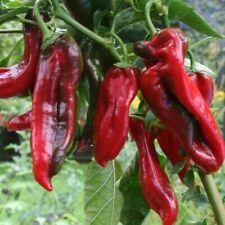 Ungarischer Spitzpaprika  Perfekt zum Grillen Füllen 20 Samen