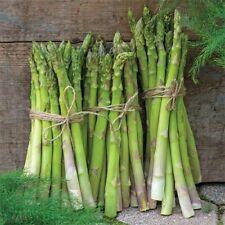 Seeds Asparagus Royal Delicious Vegetable Organic Heirloom NON GMO