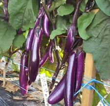 Chinese Eggplant Seeds USA Long Purple Eggplants Aubergine Asian Vegetable Seed