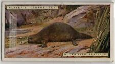 Duck Billed Platypus Australia Marsupial 1924 Trade Ad Card