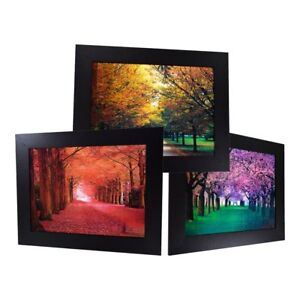3 Dimension 3D Lenticular Picture Road Path Under Trees Seasons Landscaping