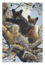"""CARL BRENDERS - """" HIGH ADVENTURE - BLACK BEARS """" - FRAMED"""
