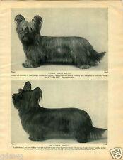 1930 Book Plate Dog Print Skye Terrier Luckie Henry Mascot Mollie Dorien Leigh