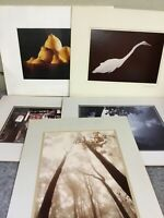5 Large Photos Matted For Display-Artistic-Lemons-Birds-Three Signed
