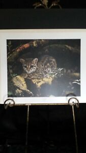 A Sunny Spot by Charles Frace Margay Wildcat
