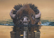 """""""Stillwater Crossing"""" Daniel Smith Museum Edition Giclee Canvas - American Bison"""