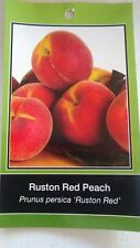4'-5' RUSTON RED PEACH Tree Live Healthy Trees Fruit Garden Plant Home Peaches