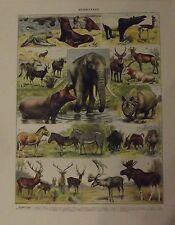 Art Print on Original Antique Book Page 1950 Mammifère éléphant Rhinocéros etc