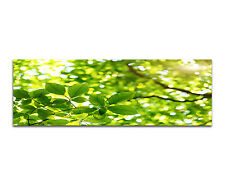 150x50cm - Green Leaves In The Forest Blätter Wald Panorama Wandbild Leinwand